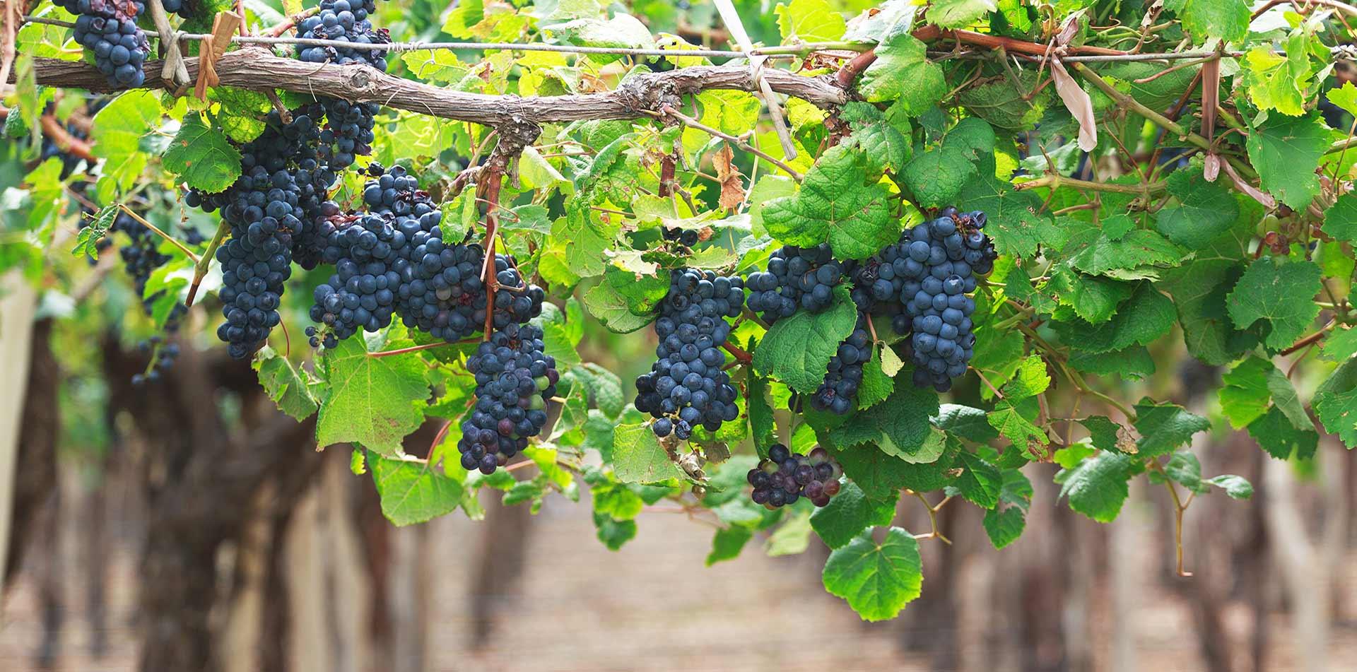 Gastronomie-Wijn-Eten-in-Kroatie
